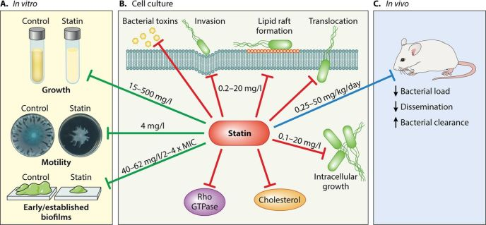 Hennessy Emma Is there potential for repurposing statins as novel antimicrobials Antimicrobial agents and chemotherapy F2