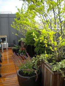 Lower East Side Roof Garden Erbology