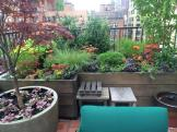 Upper East Side Terrace Country Casual Planting
