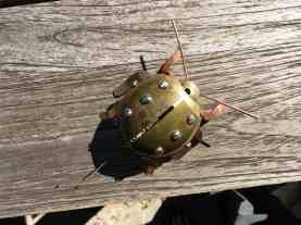 Steampunk Beetle 1