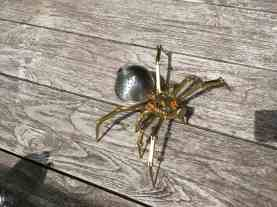 Steampunk Spider 5