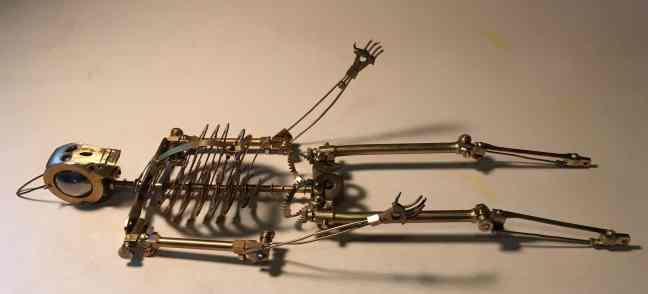 23 skeleton laying