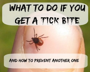 Tick-Bite-2