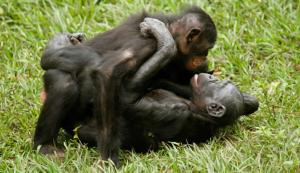 homosexuality in animals