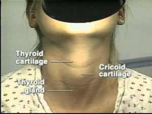 thyroid self exam
