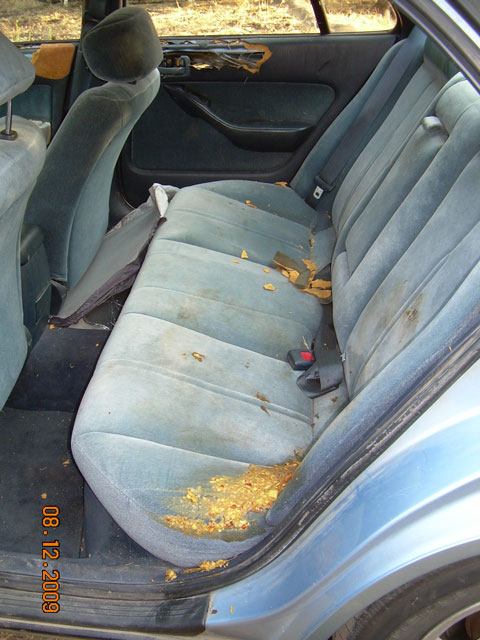 Aftermath of Blue 1 in car. There was no food in the car. (Photo by Paul Pyle)