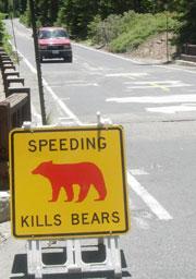 bear.sign.car-web