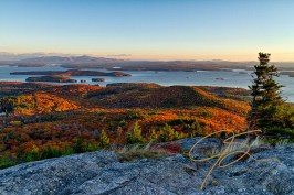 From the summit of Mt. Major in Alton, overlooking Lake Winnipesaukee. The early morning sun illuminating the eastern facing slopes of the rolling hills, covered in vibrant Autumn hues. A lone pine tree stands in the right lower corner of the frame, it's branches shaped by the winds.
