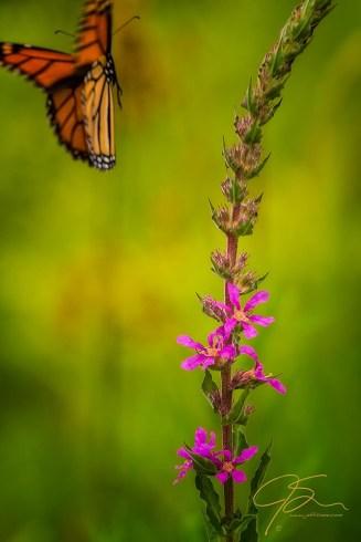 Flutter Away