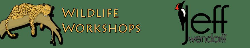 Jeff Wendorff Photography and Wildlife Workshops logos