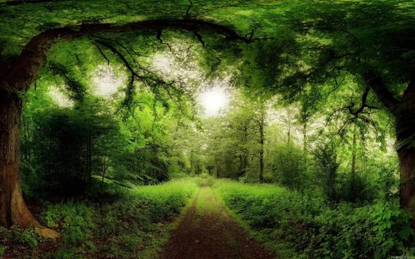 Nature Forest Desktop Backgrounds