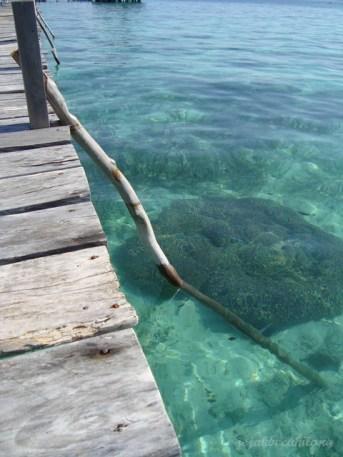 terumbu karang yang terlihat jelas dari jembatan