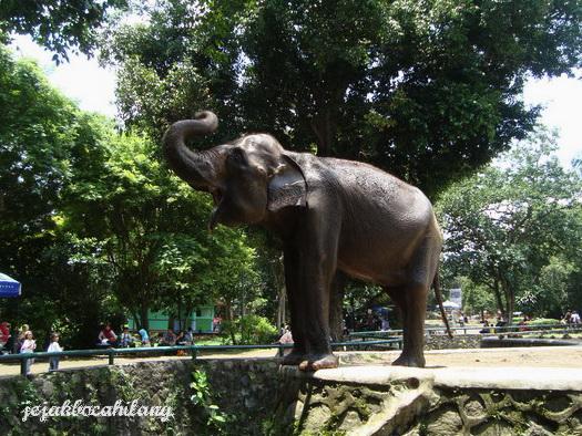 Gajah di Kebun Binatang Ragunan