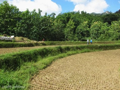 jalan menuju Air Terjun Banyu Anjlok