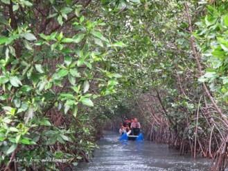 Pekalongan Mangrove Park