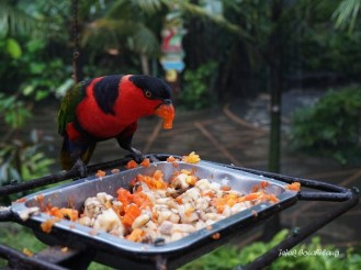 Bird Park Gembira Loka Zoo