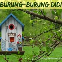 DONGENG ANAK: Burung-Burung Didi