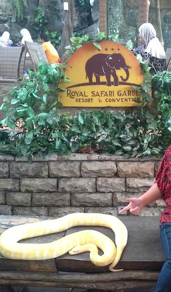 royal safari garden taman safari puncak
