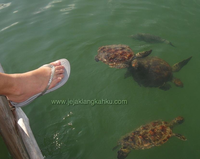 taman biota laut pulau harapan 11-1