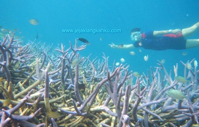wisata pulau seribu jakarta snorkeling