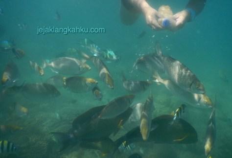 gili nanggu lombok 6