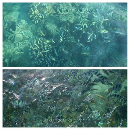 snorkeling pantai lovina bali 4