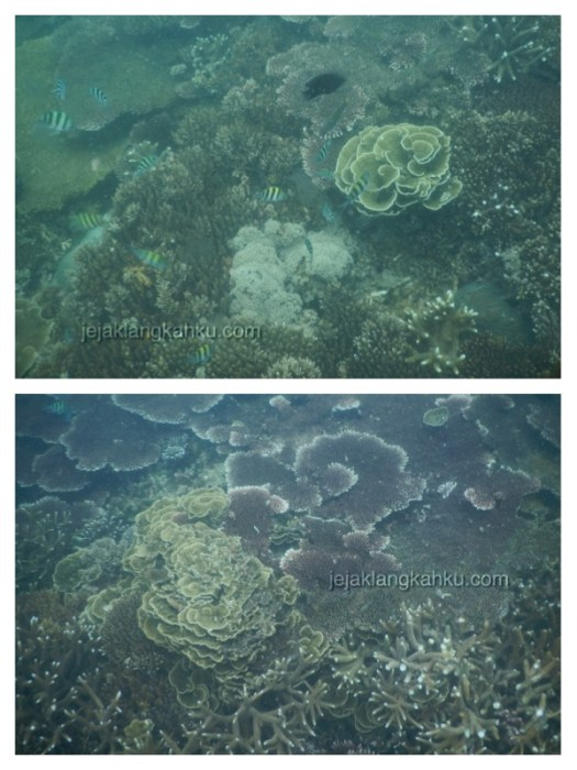 snorkeling pulau lengkuas belitung 2