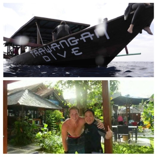 diving sea snake lombok 5