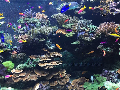 SEA Aquarium Singapore 0