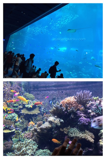 SEA Aquarium Singapore 1