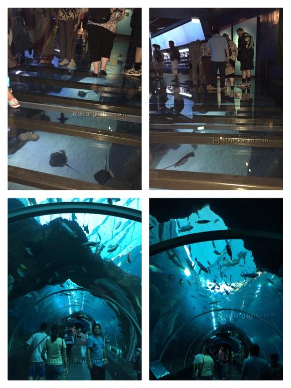 sea aquarium singapore 4