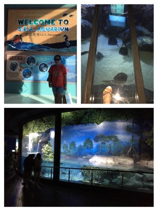 sea aquarium singapore 5
