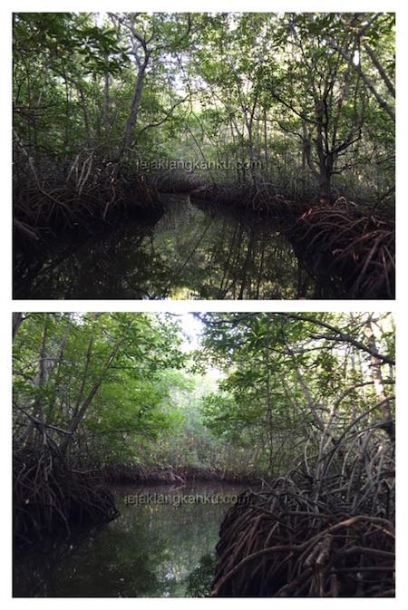mangrove forest nusa lembongan 7
