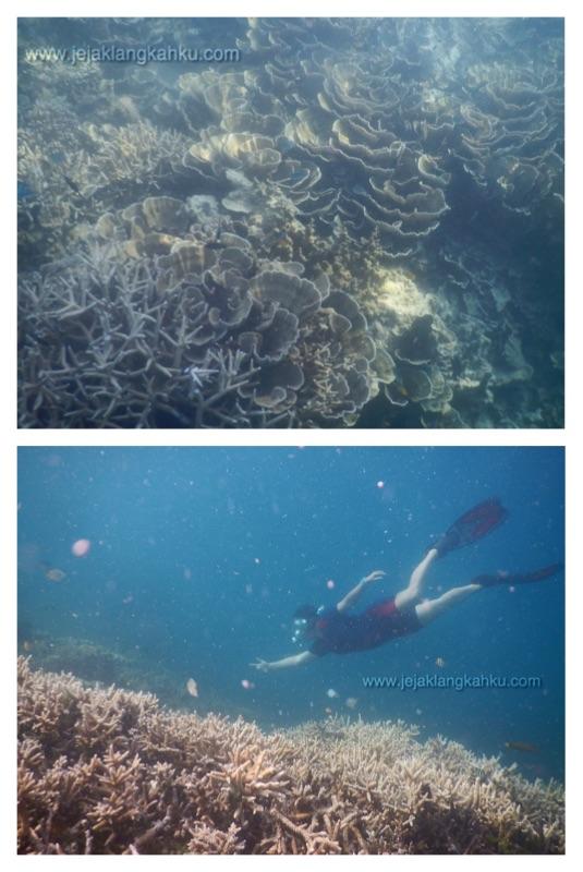 snorkeling pulau kayu genteng c