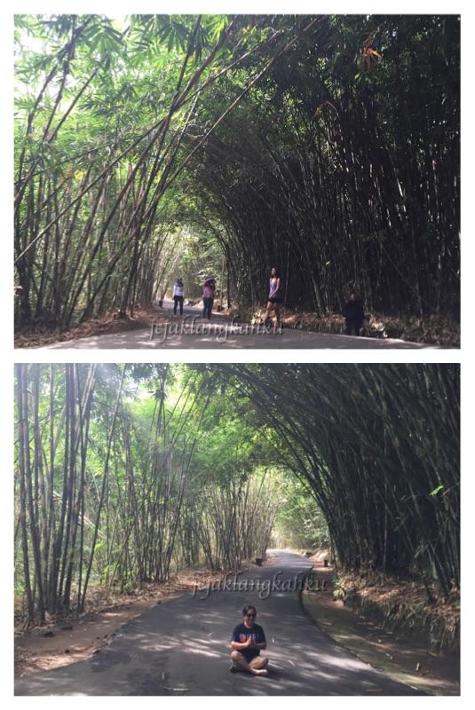 hutan-bambu-desa-penglipuran-bali-a