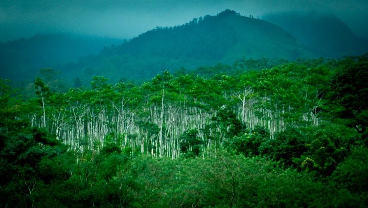 view pegunungan dari kebun teh