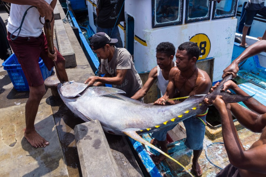 nelayan larantuka dan tuna