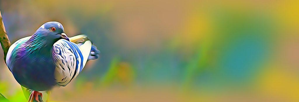 비둘기배너