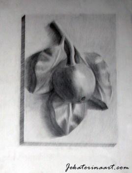 Pencil Drawings Katerina Krjanina Palm Coast Florida