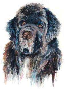 """Ink, 12x18"""", Pet Commission"""