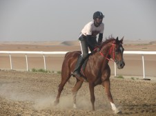 Very fast race horses