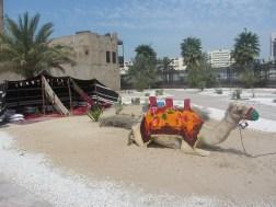 More camels!
