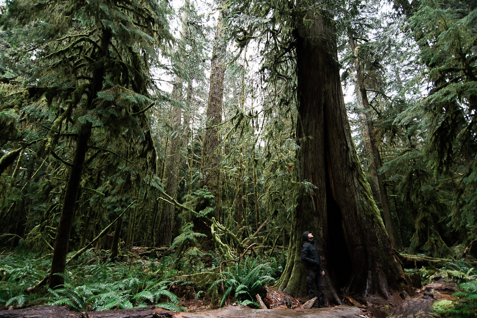 vancouver-island-cathedral-grove