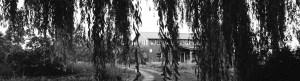 Jello Mold Farm barn with willow trees