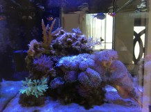Side view of the Elos tank.