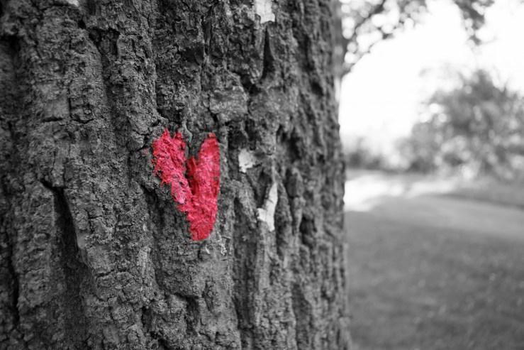 Nos pensées façonnent notre futur, blog Marie-Eve Boudreault, Auteure