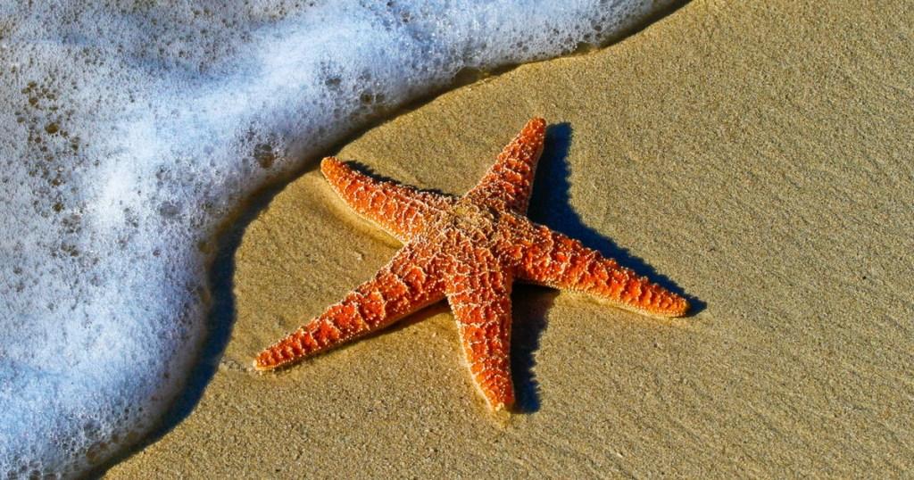 Préparer un voyage en famille: 6 essentiels dans la liste de préparation, Blogue Je Materne