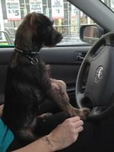 Just driving, no biggie