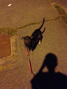 First walk