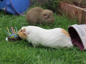 colmans seventh birthday party